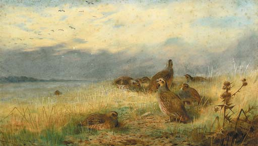 Archibald Thorburn >> A Covey Of Partridge In The Stubble, With Lapwings Flying Overhead  |  (aquarelle, reproduction, copie, tableau, oeuvre, peinture).