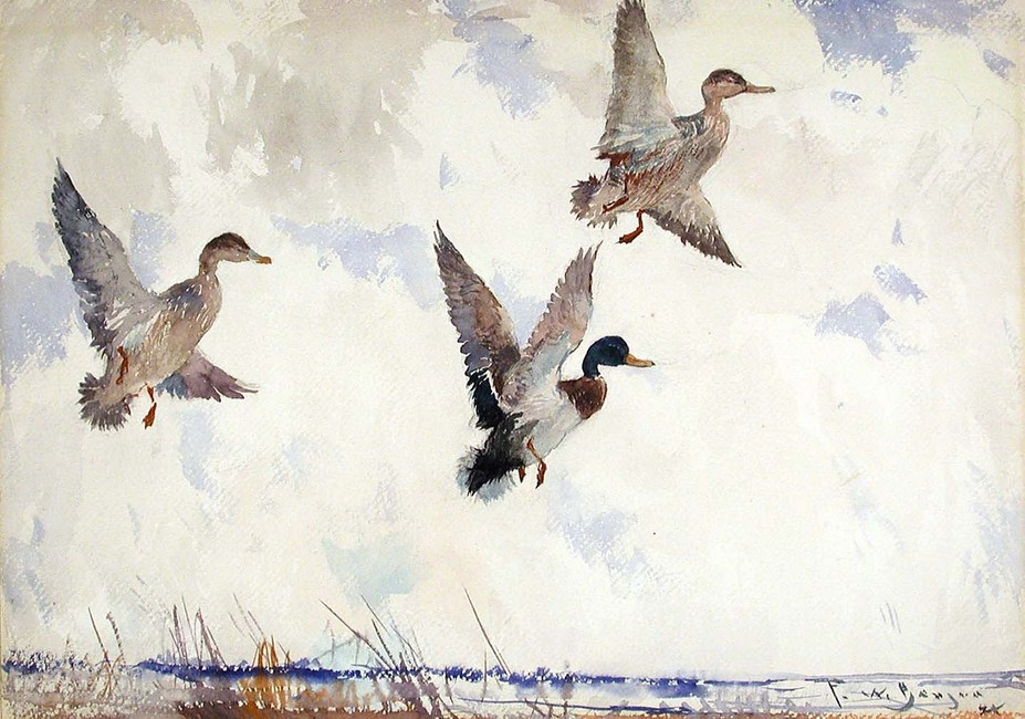 Frank Weston Benson >> Rising Mallards  |  (aquarelle, reproduction, copie, tableau, oeuvre, peinture).