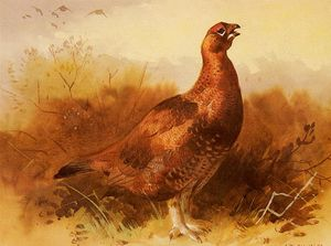 Archibald Thorburn - Cock Grouse