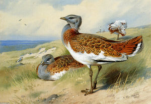 Archibald Thorburn - Outardes barbues