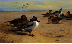 Archibald Thorburn - Canards pilet
