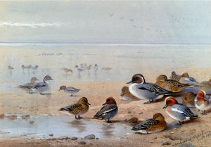 Archibald Thorburn - Pintail , teal et canard , sur le rivage