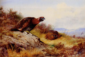 Archibald Thorburn - Red Grouse sur la lande