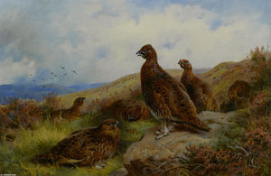Archibald Thorburn - Red Grouse Emballage