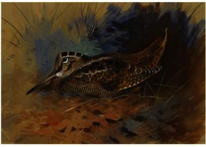 Archibald Thorburn - Woodcock 1
