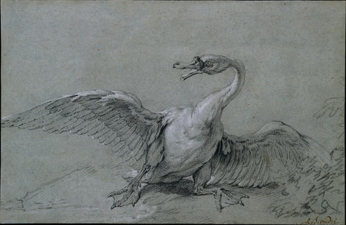 Swan Angry de Jean-Baptiste Oudry (1686-1755, France)