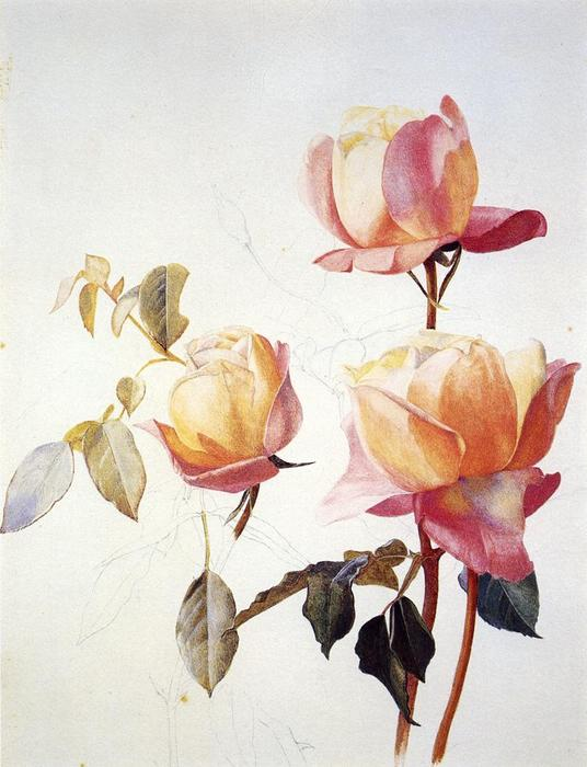 Roses florentins, aquarelle de Henry Roderick Newman (1833-1918, United States)