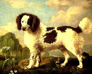 George Stubbs - Marron et Blanc Norfolk ou Water Spaniel