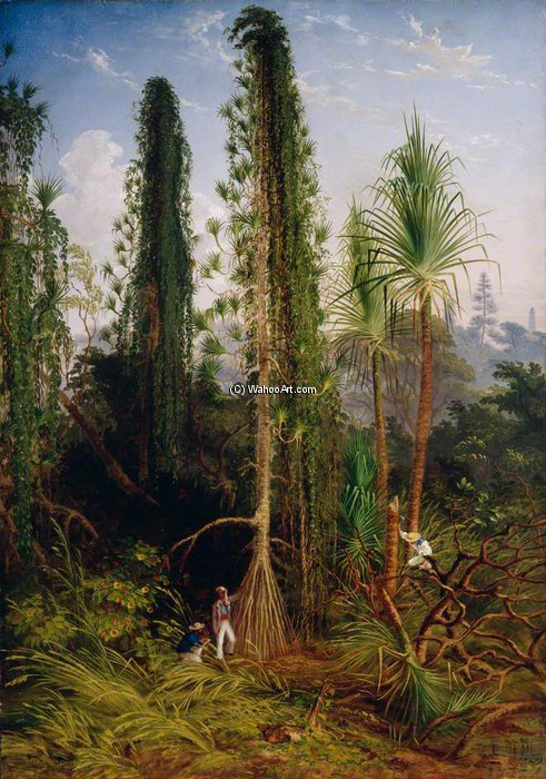 Pandanus de Thomas Baines (1820-1875, United Kingdom)