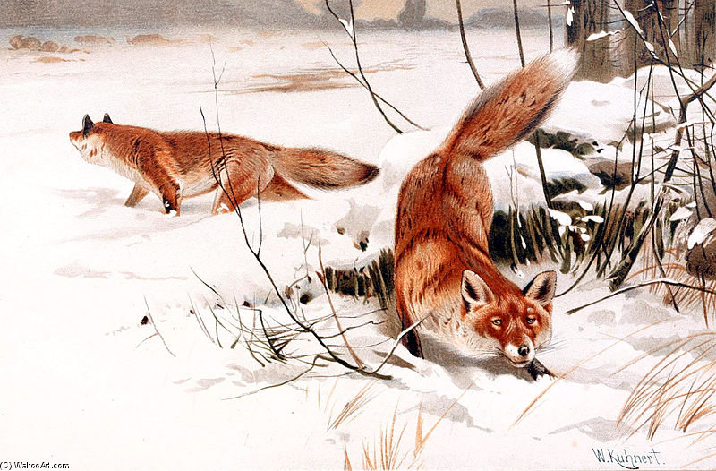 commun Renards  dans  la  neiges  de Friedrich Wilhelm Kuhnert (1865-1926, Poland)