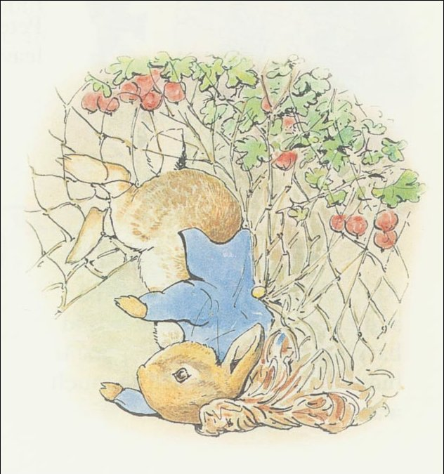 Peter Rabbit 15a - (11x11) de Beatrix Potter (1866-1943)