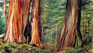 Marianne North - le mariposa petit bois  de  grand  arbres  Californie