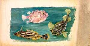 Marianne North - poissons