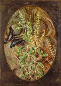Marianne North - holy basil ou tulsi