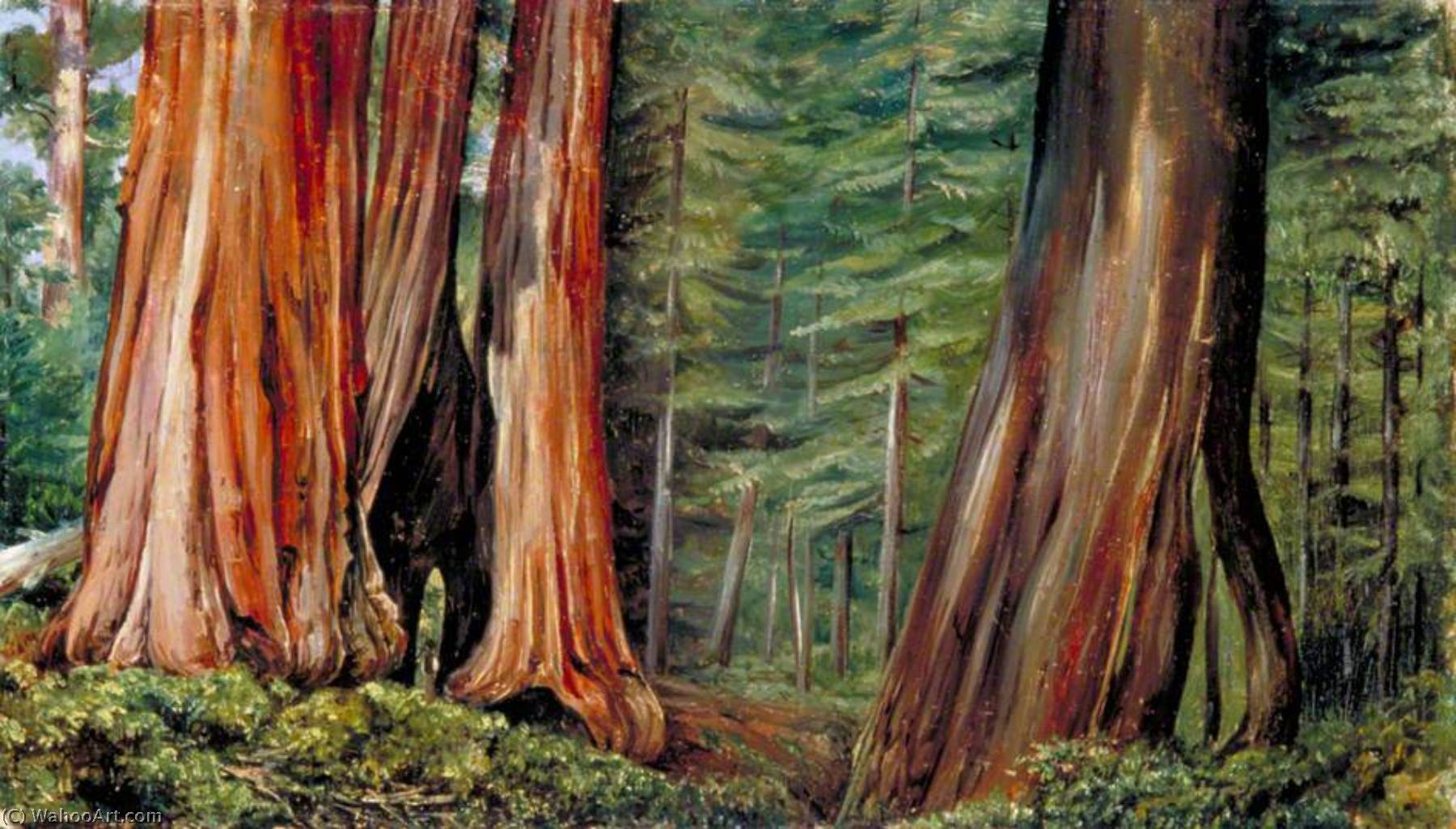 Achat Reproductions D'art | le mariposa petit bois  de  grand  arbres  Californie , 1875 de Marianne North (1830-1890, United Kingdom) | WahooArt.com