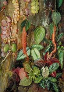 Marianne North - Groupe d Bornean Usines