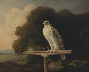George Stubbs - Groenland faucon