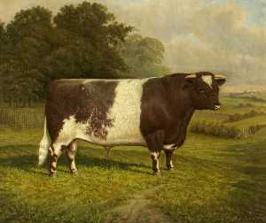William Albert Clark - 'Pretender' , une Prix shorthorn gagnant Taureau